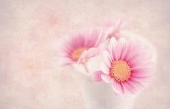 цветет малое стоковые фото