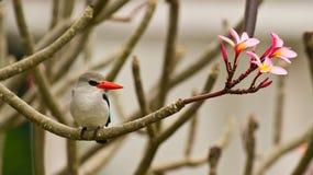 цветет мангрова kingfisher стоковое изображение rf