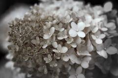 цветет малюсенькое Стоковая Фотография RF