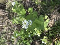 цветет малюсенькое Стоковое Изображение