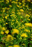 цветет много Стоковые Фото