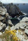 цветет море Стоковые Фотографии RF