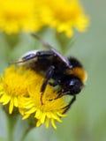 цветет насекомые Стоковые Фото