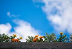 цветет небо Стоковые Изображения RF