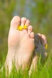 цветет нога Стоковая Фотография