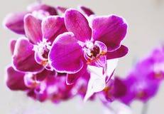 цветет обои орхидеи безшовные Селективный фокус Стоковое Изображение RF
