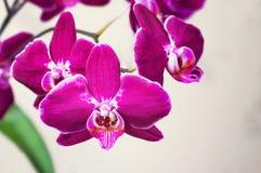 цветет обои орхидеи безшовные Селективный фокус Стоковое Изображение
