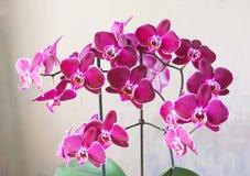 цветет обои орхидеи безшовные Стоковое фото RF