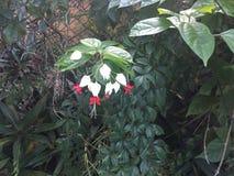 Цветет одичалая красная белизна Стоковое Изображение RF