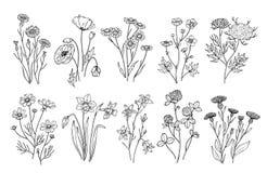 цветет одичалое Элементы природы wildflowers и трав эскиза ботанические Поля лета руки набор вектора вычерченного цветя иллюстрация вектора