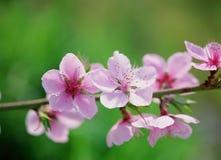 цветет одичалое Стоковое фото RF