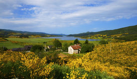 цветет озеро Стоковая Фотография RF