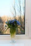 цветет окно силла Стоковое Изображение RF
