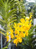 цветет орхидея Стоковые Изображения RF
