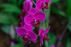 цветет орхидея стоковое фото rf
