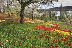 цветет остров Стоковое фото RF