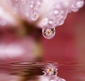 цветет отражения их Стоковые Фото