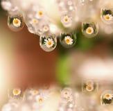 цветет отражения их Стоковая Фотография RF