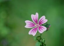 цветет одичалое Стоковое Изображение