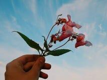 цветет одичалое Стоковая Фотография
