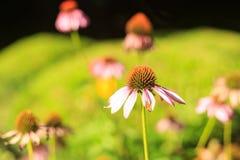 цветет одичалое Стоковая Фотография RF
