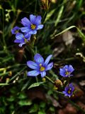 цветет одичалое стоковое изображение rf