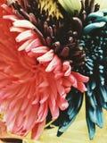 цветет пестротканое Стоковая Фотография RF