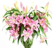 цветет пинк лилии Стоковое Изображение RF
