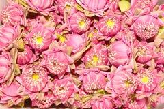 цветет пинк лотоса Стоковое Изображение RF