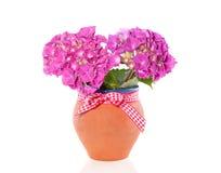 цветет пинк hydrangea Стоковое Фото