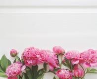 цветет пинк peony Стоковая Фотография RF