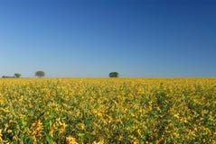 цветет плантация Стоковые Изображения