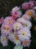 цветет помадка стоковая фотография rf