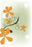 цветет помеец Стоковое Фото