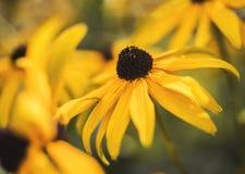 цветет померанцовое одичалое стоковое фото