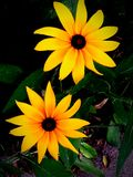 цветет померанцовый желтый цвет Стоковая Фотография