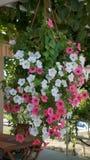 цветет полная дом Стоковые Фото