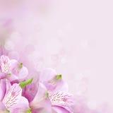 Цветет предпосылка, красивейшая природа Стоковые Фото