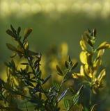 Цветет предпосылка леса флористическая красивая Желтые цветки в расчистке в солнечности на заходе солнца на летний день closeup Стоковые Фото