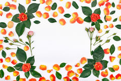 Цветет предпосылка, рамка с розами Стоковые Фото