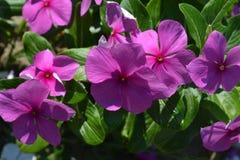 цветет природа Стоковая Фотография