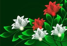 цветет прозрачное Стоковое фото RF