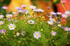 цветет пурпуровое малое Стоковая Фотография RF