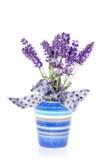 цветет пурпур лаванды Стоковые Изображения