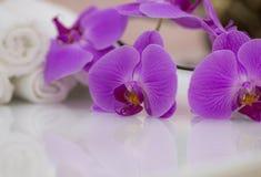 цветет пурпур орхидеи Стоковое фото RF