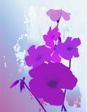 цветет пурпур Стоковое Фото