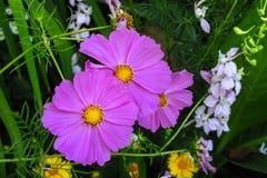 цветет пурпур Стоковые Изображения