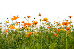 цветет пуща Стоковое Изображение