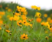 цветет пуща Стоковое Фото
