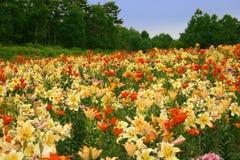 цветет пуща Стоковые Изображения RF